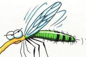 Augusztus 4-től a kerület saját forrásból végez ismételt szúnyoggyérítést