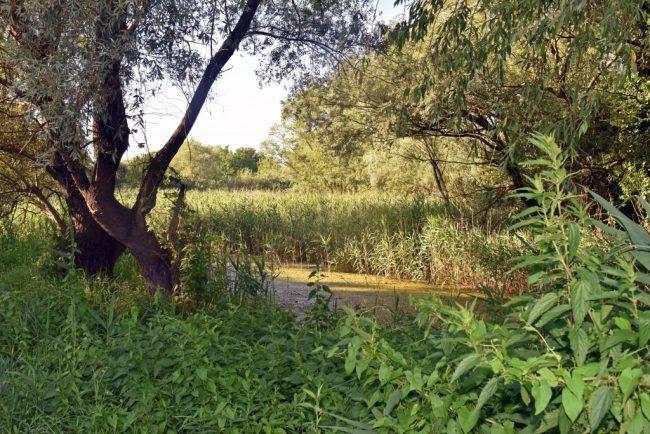Tájékoztató a Szilas-tó melletti erdőterületről